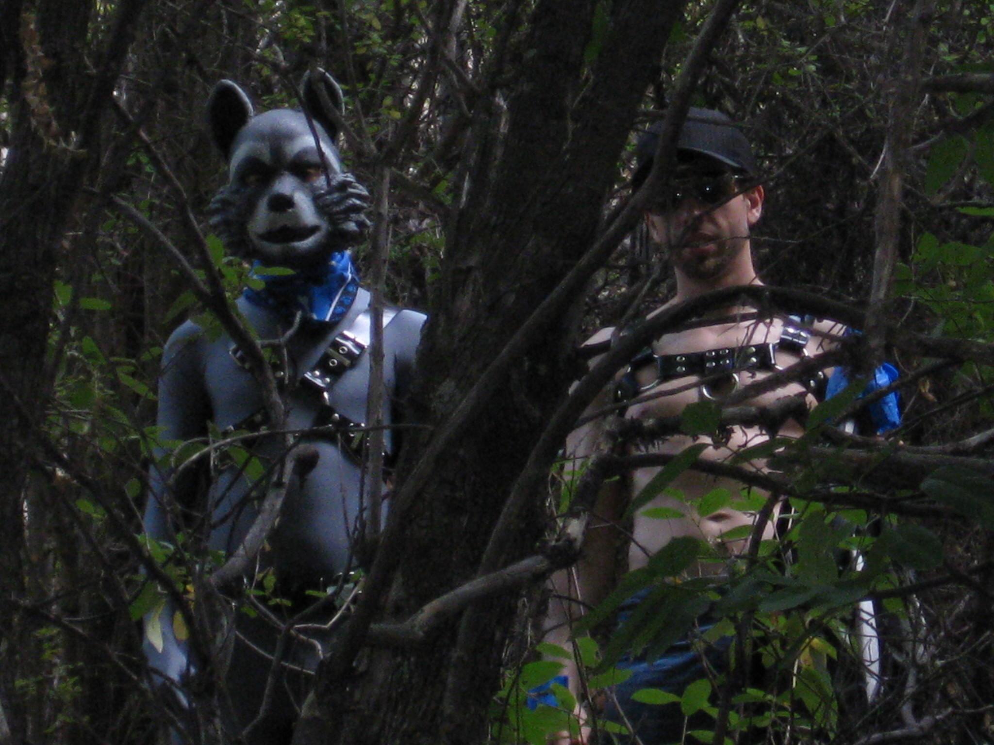fox hunt 012