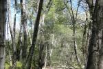 05_04-21-12 Spring Fox Hunt