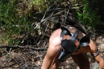 Fox Hunt 27